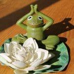 meditoiva sammakko
