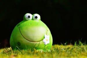 tyytyväinen sammakko, joka hymyilee
